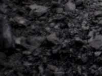 Steam Coal < 5,500 - 5,300 >